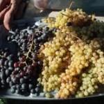 September Farmers' Market in Paso