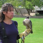 Falconry in the Vineyard – Super Sexy IPM